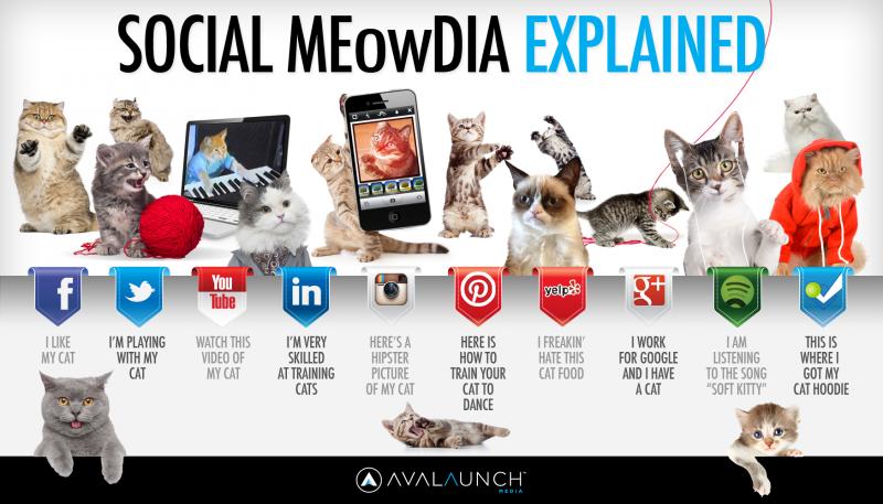 Social Meowdia Explained - JC Social Media